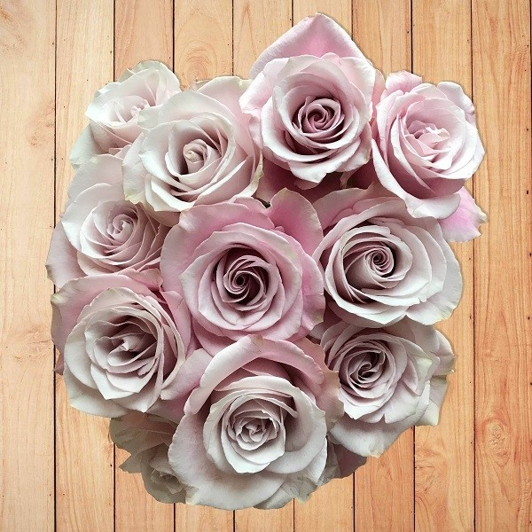 silvery-lavender-roses
