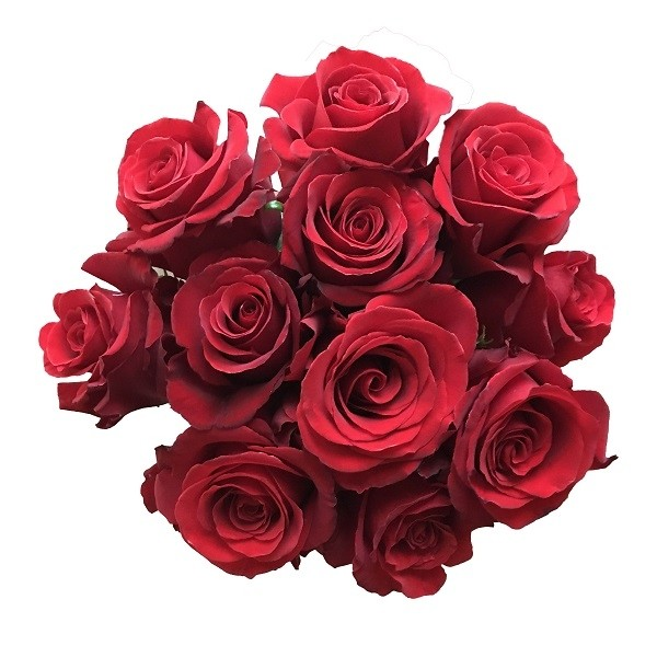 Sexy Red Roses