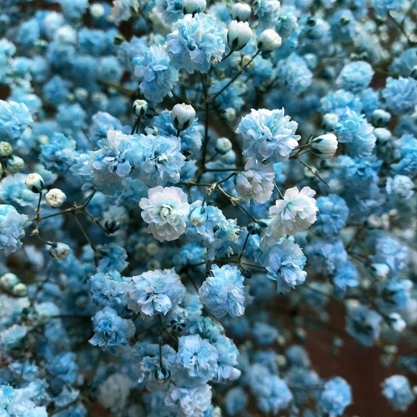 Blue Turquoise Baby's Breath