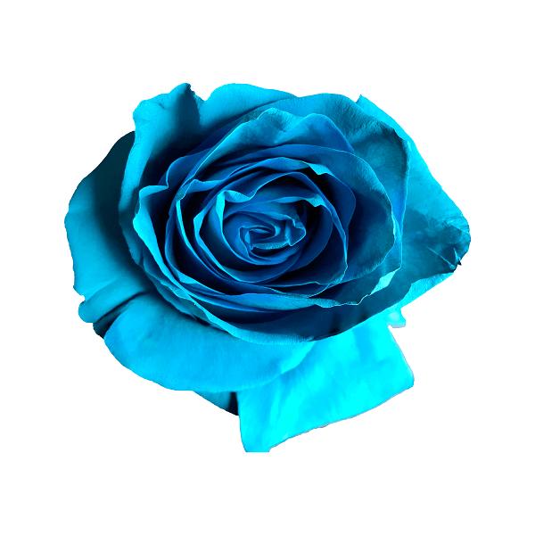 turqouise rose