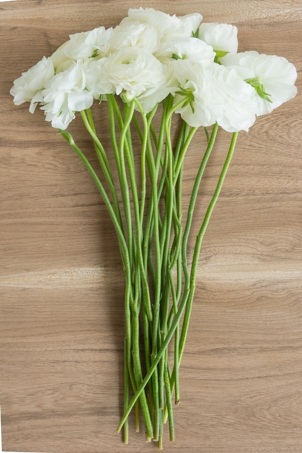 White Ranunculus (Flowers)
