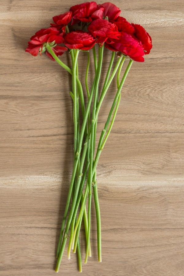 Red Ranunculus Stems on Table