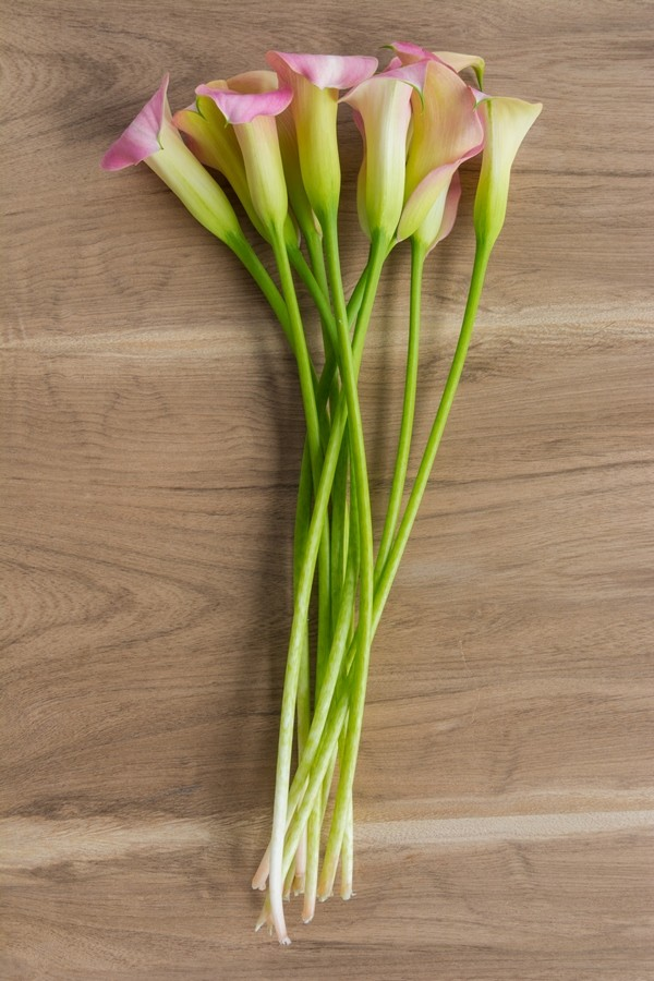 Light Pink Mini Callas