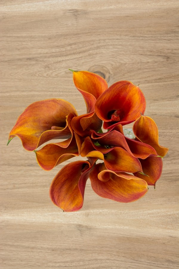 Orange Mini Calla