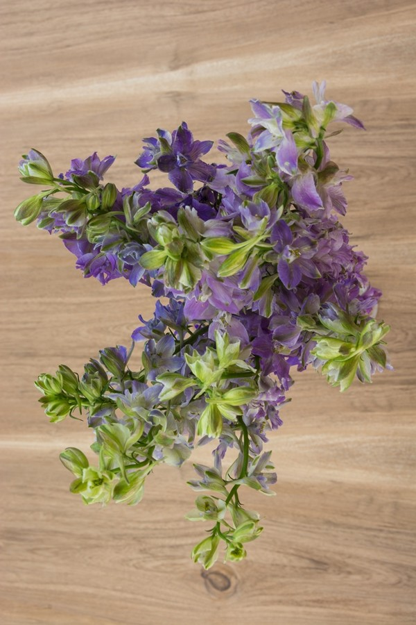 Assorted Delphinium