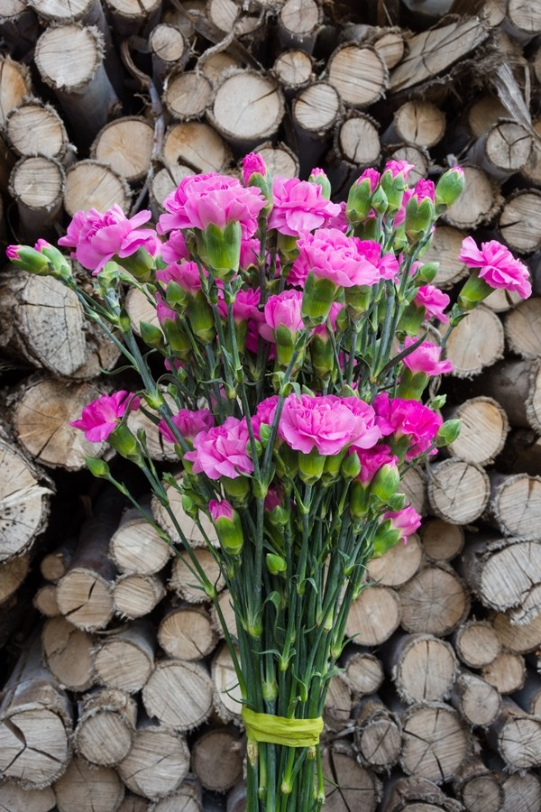 Lavender Mini Carnations