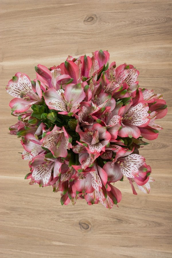 Light Pink Alstroemeria