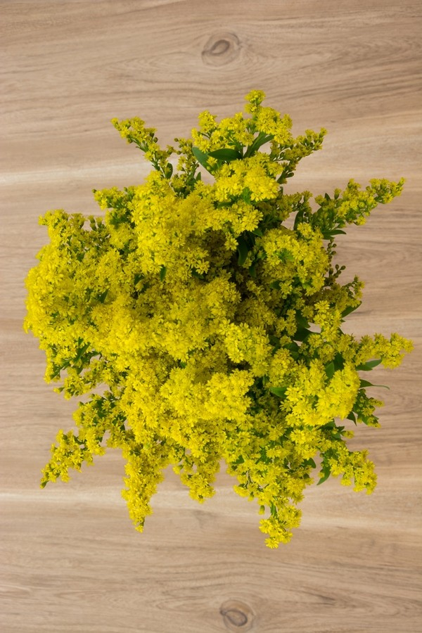 Aster Solidago Green