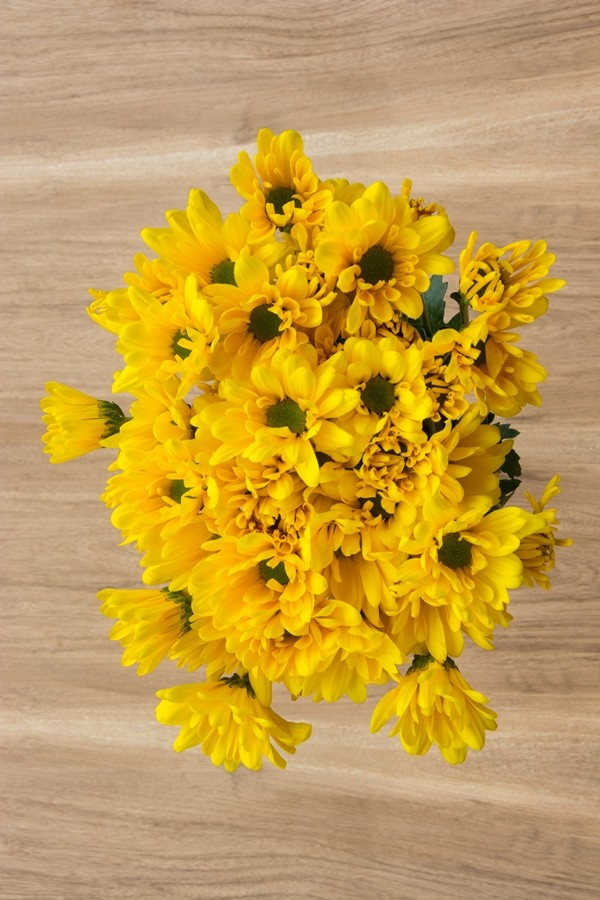 Yellow Daisy Poms
