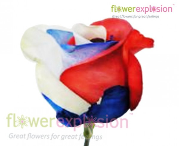 Usa flag roses red white and blue roses usa flag tinted rose mightylinksfo