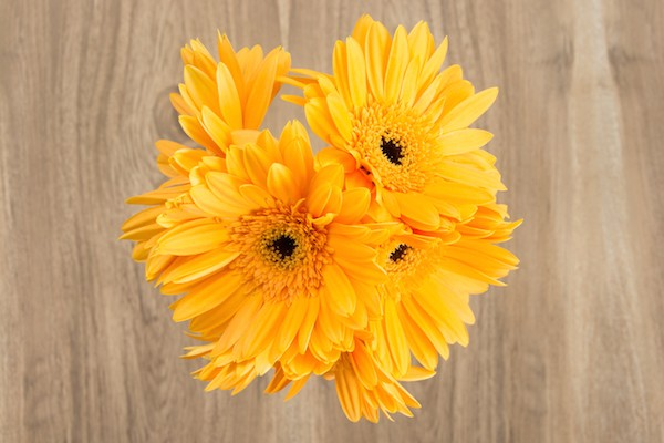 Yellow Gerbera Daisies Bouquet