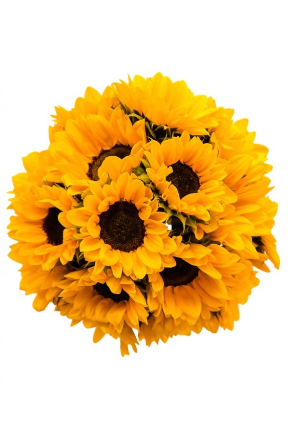 Yellow Mini Sunflowers