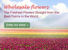 Wholesale flower - Flower Explosion